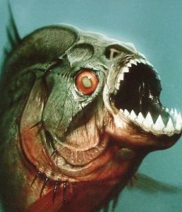 سمكة صغيرة اّكلة لحوم البشر  سمكة البيرانا المفترسة