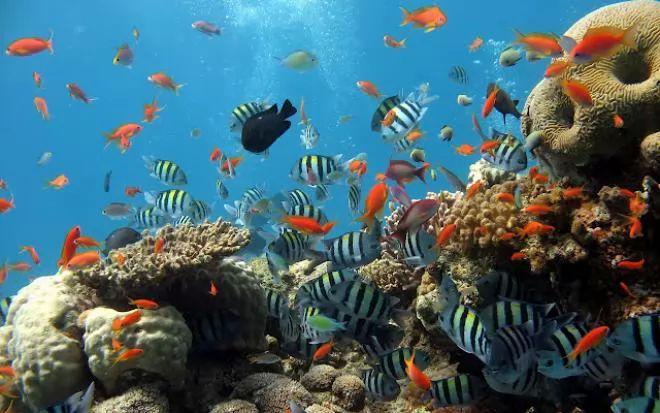 صور - أجمل 10 أسماك ملونة في عالم البحار