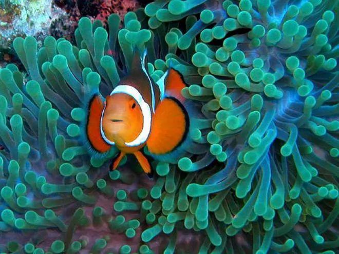 Bei En Gedanken The Most Beautiful Coloured Fish