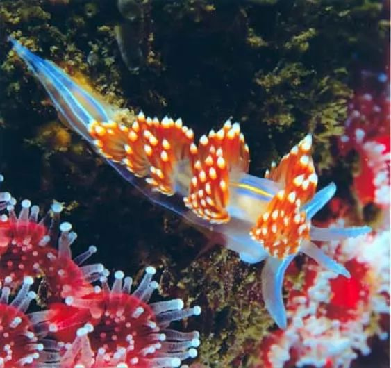 5. Nudibranch