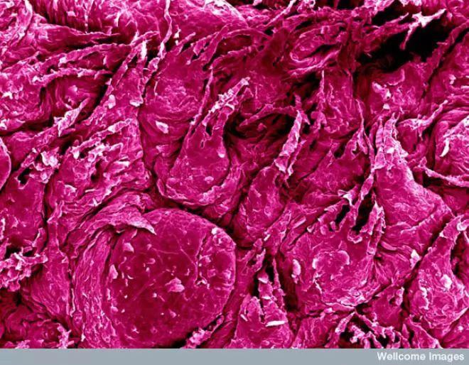 صور - رحلة إلى داخل جسم الإنسان بتفاصيله تحت الميكروسكوب