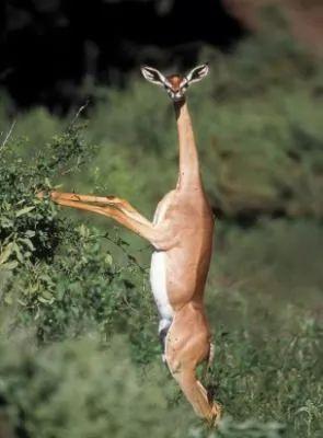 حيوانات غريبة لم تشاهدها من قبل - معلومات بالصور