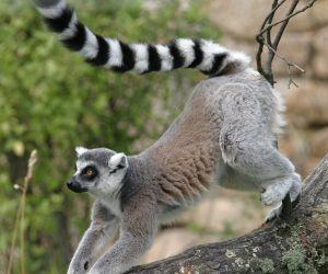 قائمة بأهم الحيوانات المهددة بالإنقراض في العالم بالصور