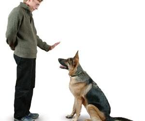كيفية تدريب الكلاب بطريقة صحيحة