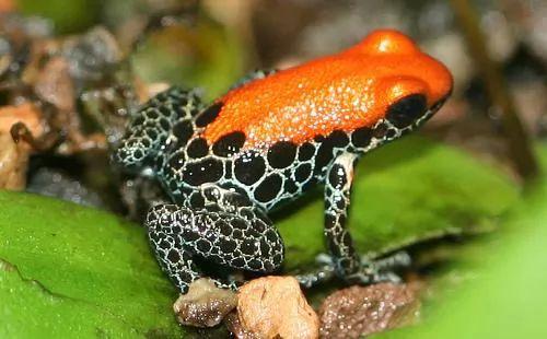 الحيوانات الموجودة فى غابات الامازون 332-1-or-1384978487.
