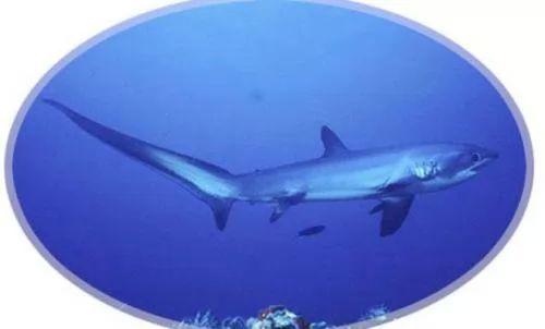 اغرب انواع القرش التى اكتشفها العلماء