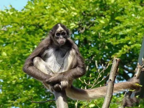 الحيوانات المهددة بالانقراض في العالم 6475-1-or-1384004359