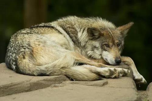 صور - قائمة بأهم الحيوانات المهددة بالإنقراض في العالم بالصور