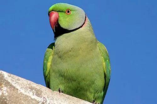 الحيوانات المهددة بالانقراض في العالم 6475-3-or-1384004361