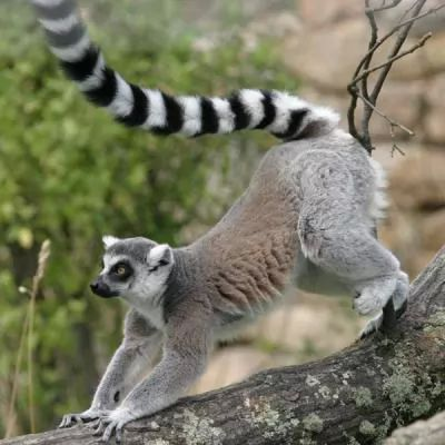 الحيوانات المهددة بالانقراض في العالم 6475-3-or-1384004429