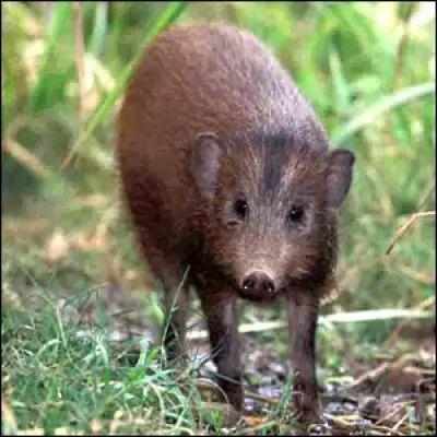 الحيوانات المهددة بالانقراض في العالم 6475-4-or-1384004362