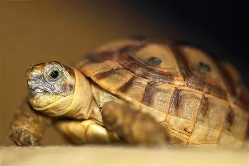 الحيوانات المهددة بالانقراض في العالم 6475-7-or-1384004365