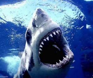 معلومات عن سمكة القرش بالصور والفيديو