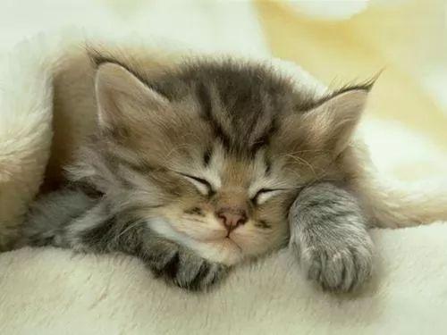 صور - أشهر أنواع القطط بالصور