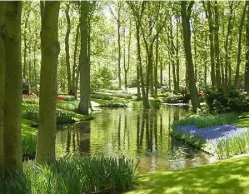 اجمل الحدائق في العالم- حديقة كيوكينهوف