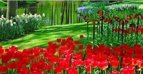 صور - اجمل الحدائق فى العالم