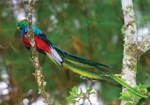 صور ومعلومات لاجمل الطيور فى العالم 133-2-or-1391368185