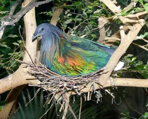 صور ومعلومات لاجمل الطيور فى العالم 133-4-or-1391368187