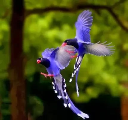 صور ومعلومات لاجمل الطيور فى العالم 133-5-or-1391368189