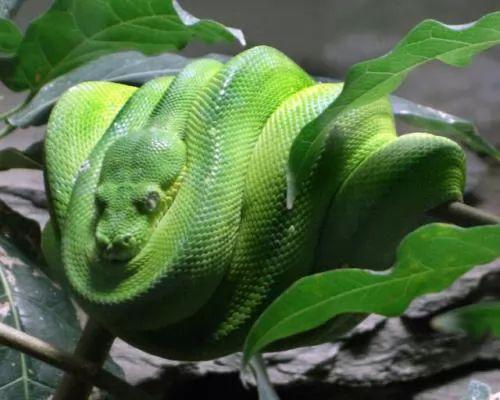 بالصور اغرب الحيوانات الموجودة فى غابات الامازون