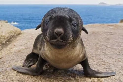 تعرف على كلب البحر بالصور