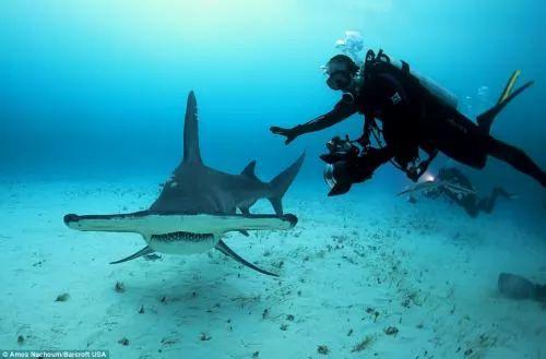 اسنان القرش الحادة اخر منظر تشاهده فى حياتك