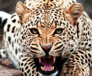 معلومات عن الحيوانات المفترسة بالصور