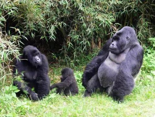 الحيوانات المهددة بالانقراض في العالم 6475-3-or-1394814695
