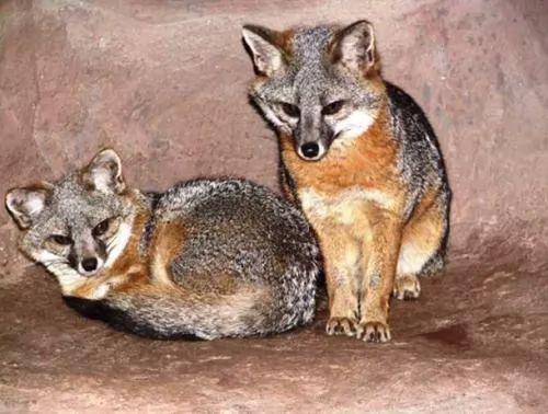 الحيوانات المهددة بالانقراض في العالم 6475-4-or-1394814697
