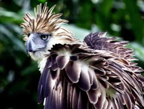 الحيوانات المهددة بالانقراض في العالم 6475-5-or-1394814698