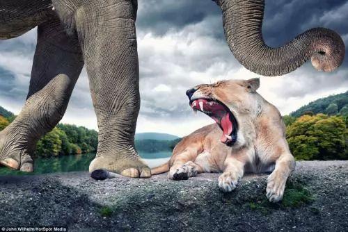 الحيوانات الفوتوشوب 6685-1-or-1394212377.jpg