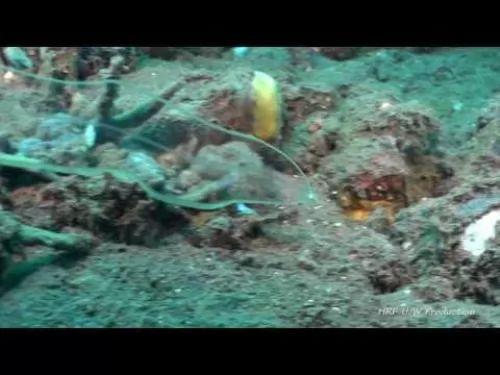 شاهد روعة وجمال ثعبان البحر الشفاف