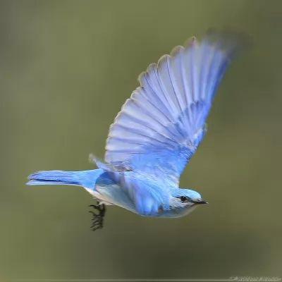 معلومات وصور اجمل الطيور فى العالم