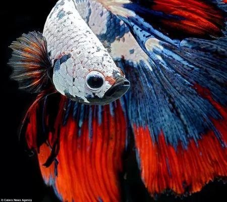 صور - اجمل صور الاسماك على الاطلاق