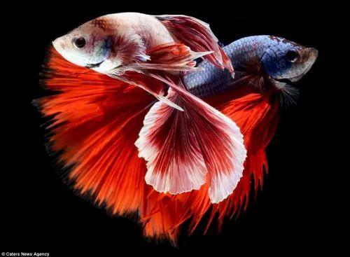 اروع واجمل صور الاسماك على الاطلاق