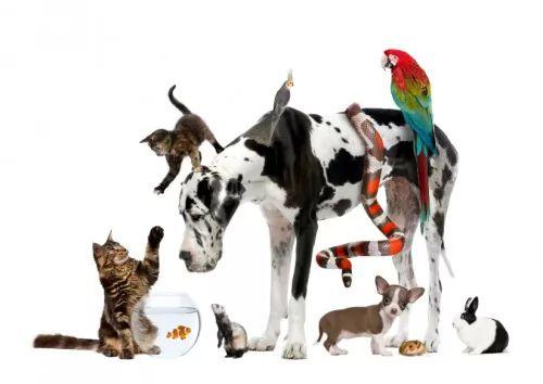 معلومات طريفة عن الحيوانات الاليفة بالصور