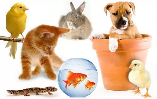 صور حيوانات 6749-5-or-1396963199