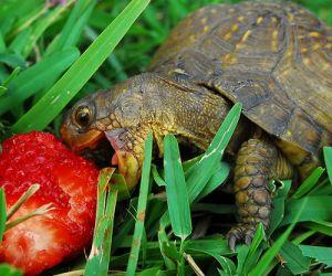 تعرف على انواع طعام السلاحف بالتفصيل
