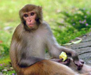 معلومات عن القرد وأنواعه بالصور والفيديو