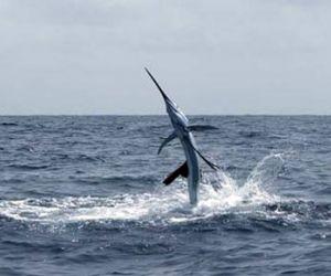 ما هو اسرع حيوان بحري في العالم ؟