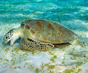 what do Sea Turtles eat And Their Curious Diet ?