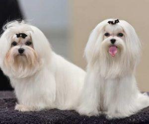 افضل انواع الكلاب الصغيرة بالصور