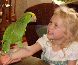 Intresting Ideas On How To Train Parrot To Talk