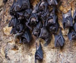 Where do Bats live ?