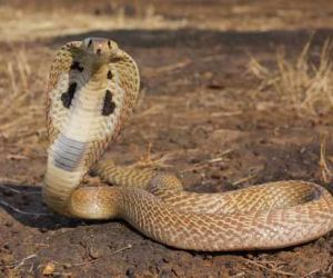 interesting facts about Snakes With pictures