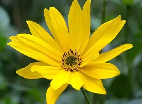 ما هي اسماء افضل زهور نادرة في العالم ؟