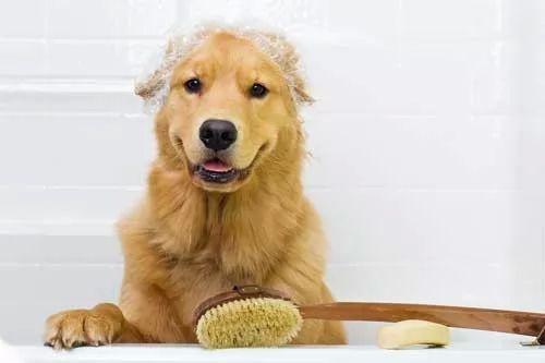 نصائح عن كيفية استحمام الكلاب