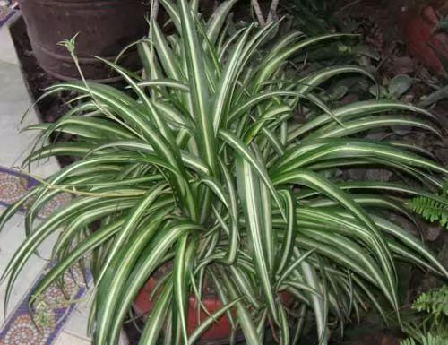 افضل النباتات المنزلية في تنقية الهواء بالصور