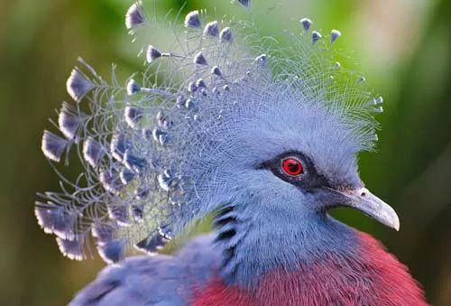 هل ترى الطيور عبر الاشعة فوق البنفسجية 7365-1-or-1437325386
