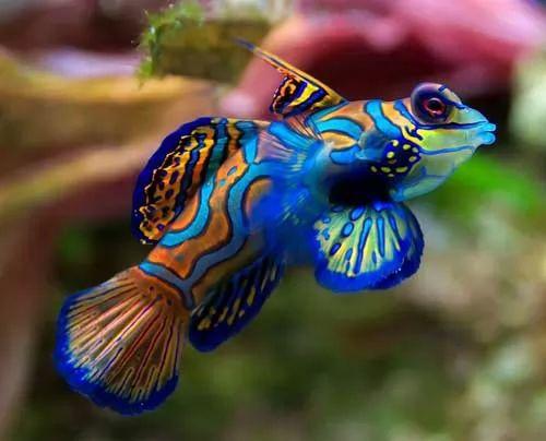 10 معلومات مثيرة عن الاسماك بالصور